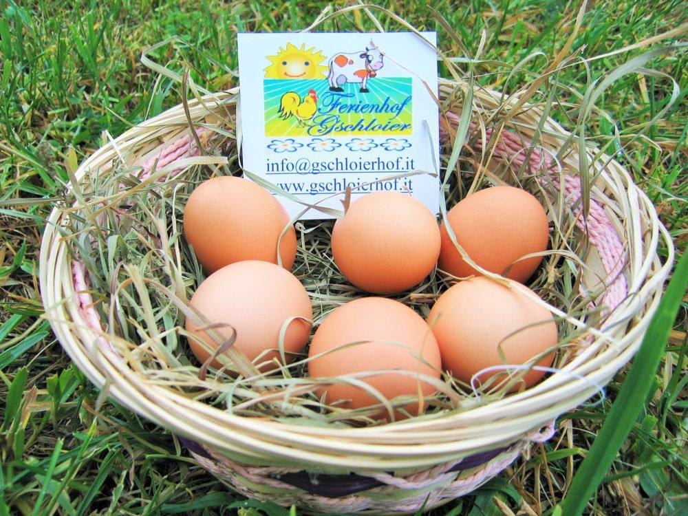 Eier von unseren glücklichen Hühnern
