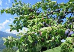 Vacanza a Laion / Alto Adige
